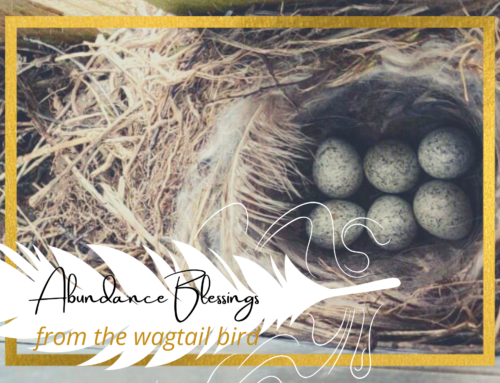 6 Abundance Blessings from the Wagtail Bird